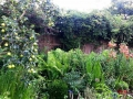 Garden- Backyard