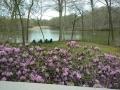 azaleas and the creek (1280x960).jpg