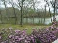 azaleas and the creek 2 (1) (1280x960).jpg