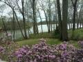 azaleas and the creek 3 (1280x960).jpg