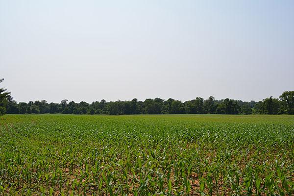 Crop-Land-807